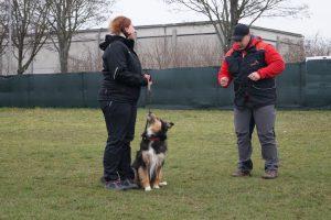 Einzelstunde Hundeerziehung