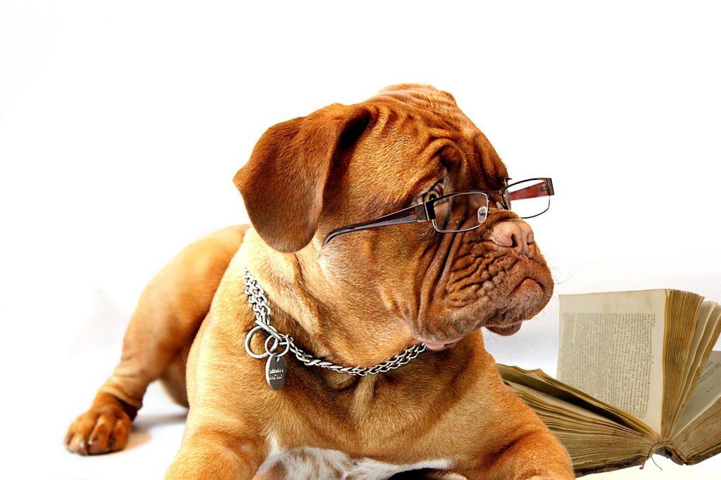 Hund mit Brille auf der Nase