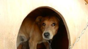 Ängstlicher Hund versteckt sich in Hundehütte