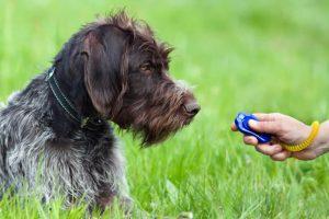 Clickertraining mit Hund