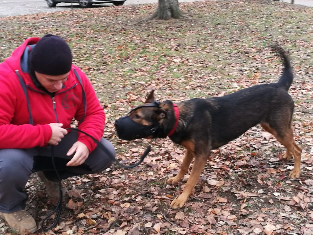 Problemhund mit Maulkorb